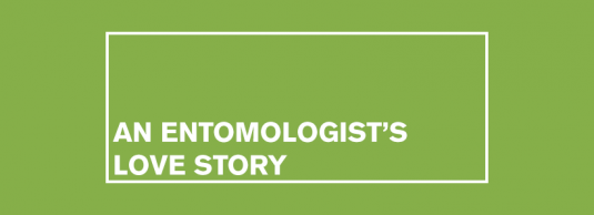 An Entomologist's Love Story by Melissa Ross